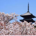 仁和寺の御室桜2018の見頃は?アクセスと見所やランチも