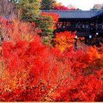 東福寺の紅葉2017の見頃は?ライトアップの時間や混雑予想も!